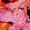 Autumn Onwards