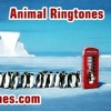 Animal Ringtones Free Ringtone Downloads For Android And iPhone