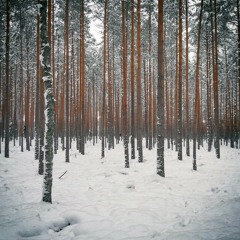Wintery Forest Acoustics Session
