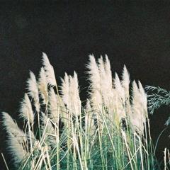 sumwun x oxela - night savannah