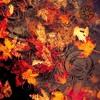 Seasidetrip 93   deep colors of autumn   Leichtigkeit Des Seins