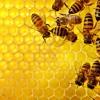 Erykah Badu - Honey (EMERLD Bee-Cool Edit)