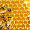 Micro Learning: What it has to do with bees and honey