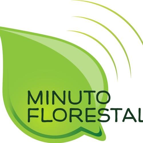Florestas Nacionais (Novembro - Programa 3)