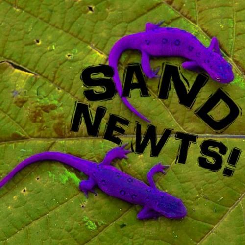 Sand Newts!