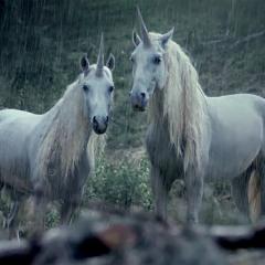 right here w/ horse head (prod. nedarb)