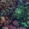 jewel tones - stolen