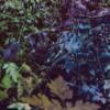 jewel tones - terra