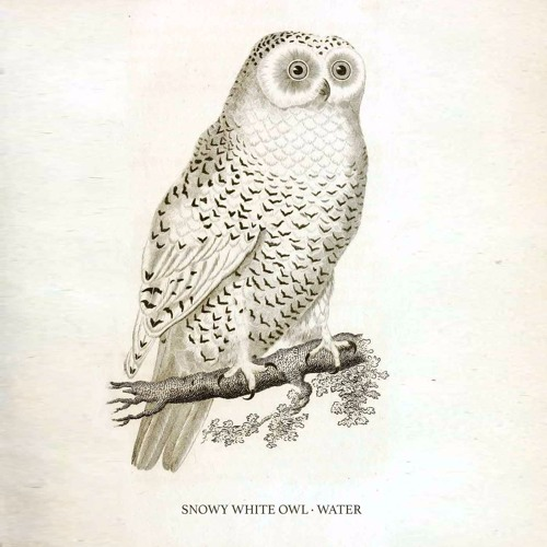 Water (Snowy White Owl)