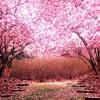 Messing With Sakura