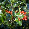 Deck The Halls With Boughs Of Holly arr. Nick Goodall