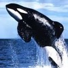 Free Willy (Explicit)
