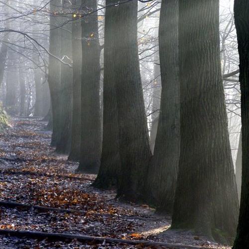 Enlightened Path