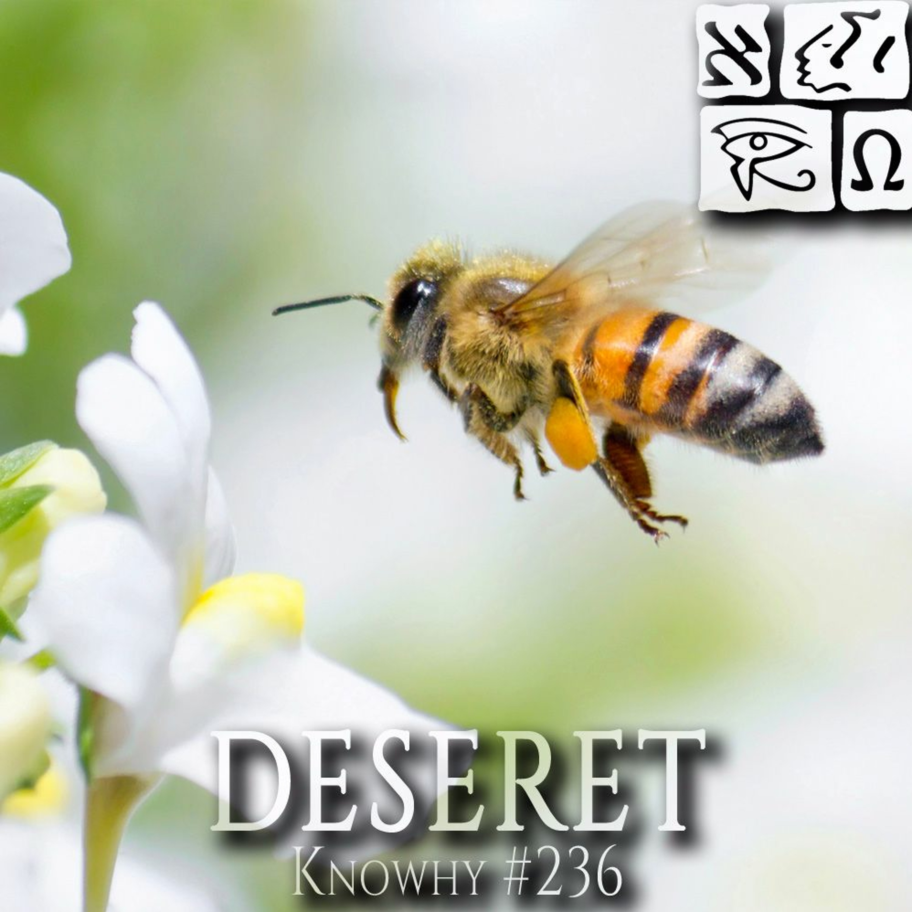 """Where Does The Word """"Deseret"""" Come..."""