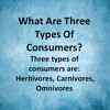 What Are Three Types Of Consumers?
