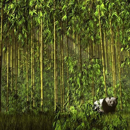 Bamboo Plantations