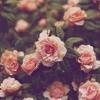 Tango To Evora - Loreena McKennit (Piano Cover by Amira Gamal)