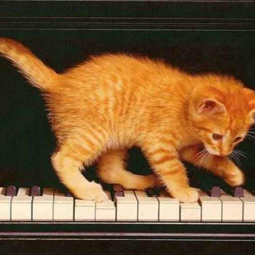 Kitten On The Keys