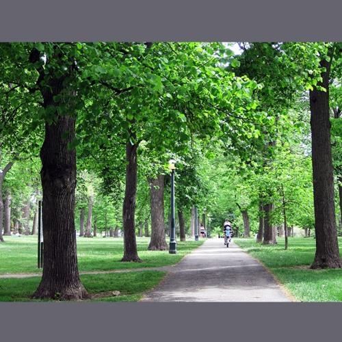 Prologue - Park Fanfare