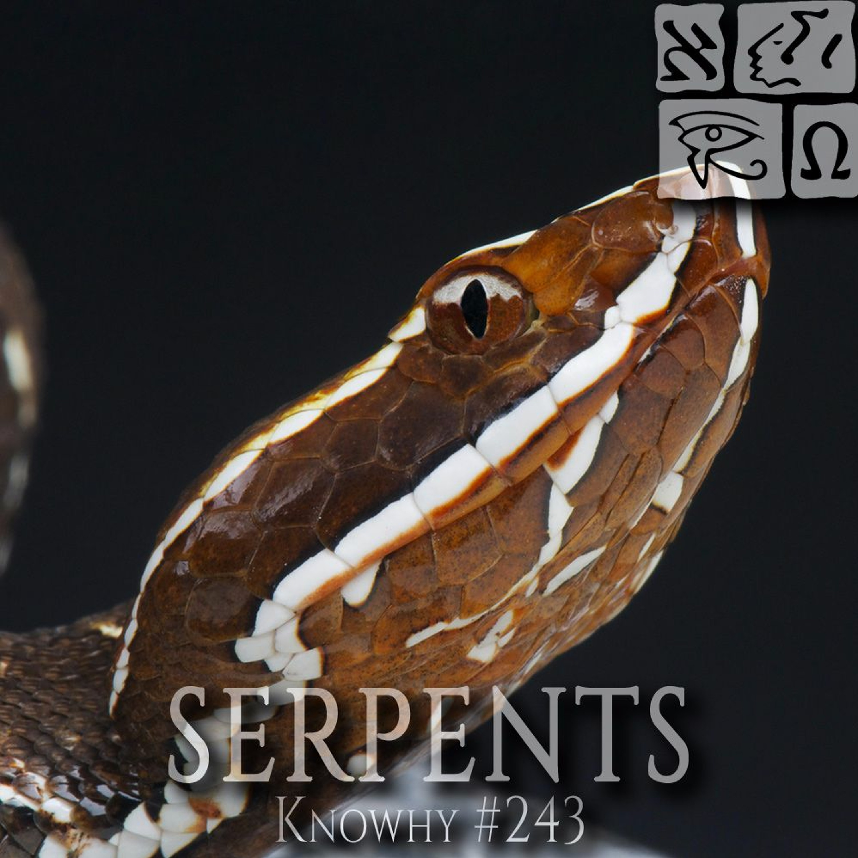 Why Did Snakes Infest Jaredite Lands...