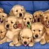 مهرجان الكلاب - مسخره   Dogs Songs