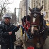 No reduction in horse-drawn carriages in NYC