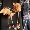 Download ameba. - flowers don't last forever[DOWNLOAD IN DESC.] Mp3
