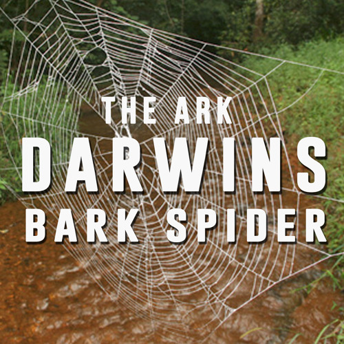 Episode 12 - Darwins Bark Spider by The Ark Podcast | Free Listening