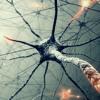 Neural Network (unm.)