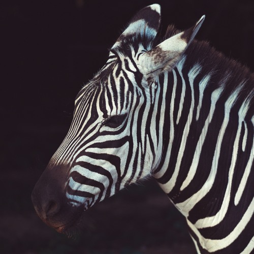 Zebra Cabs Raises $21.6 Million To Take On Uber And Taxify In South Africa
