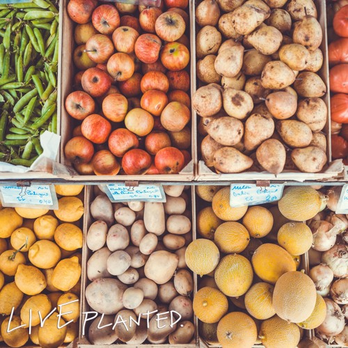 #041 Vegan on a Budget- How to Save Money on a Plant Based Diet