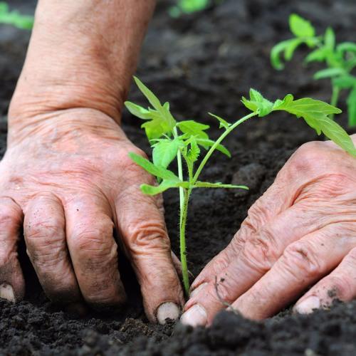 Programa: AgroEnlace el conocimiento compartido Diciembre 07 2016