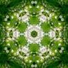 Mimic Vat & Heavenoise - Indriya *fulltrck