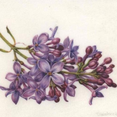 Lilac//wymyn mix