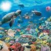 Un Mundo Bajo El Mar