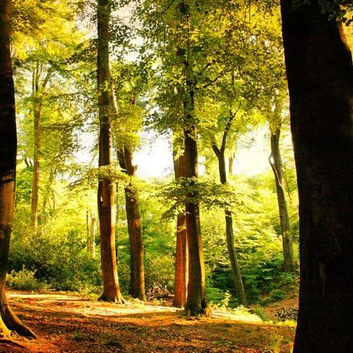 Кога Зашумят Шумите