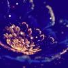 Crown Me King (Hit Maker$Exclusive)-Dana White