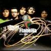 FLANELLA - APA DAYA