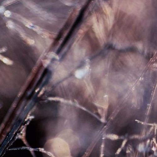 Plantcast 02 - Stefan Helmke