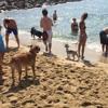 El Moviment de Diagonal Mar valora la platja de gossos i la seva possible ampliació.