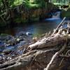 Iona Lane    River (Joni Mitchell cover)