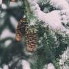 [Merry Christmas] Snow - Sleeping At Last