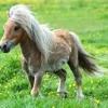 Pony - Ginuwine (Break Night Remix)