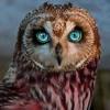 Owl Cry