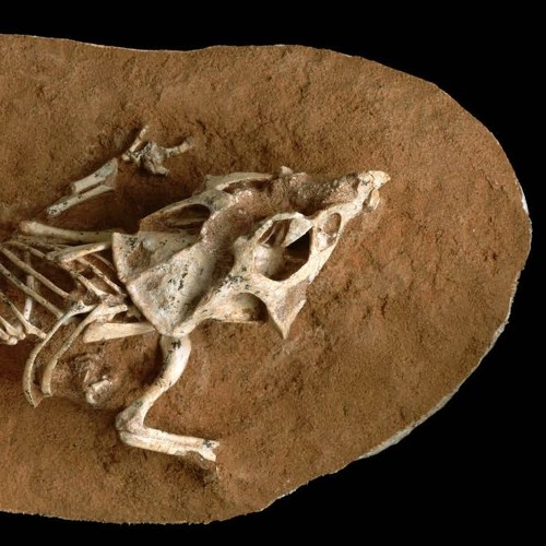 Cracking Open How Dinosaurs Hatched