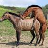 Zuação - O que o cavalo fez com a égua kkkkk - Vanessa - Amanda - Dayana e Andreza - Mc Koréia - 017