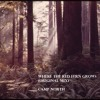 Where The Red Fern Grows (Original Mix)