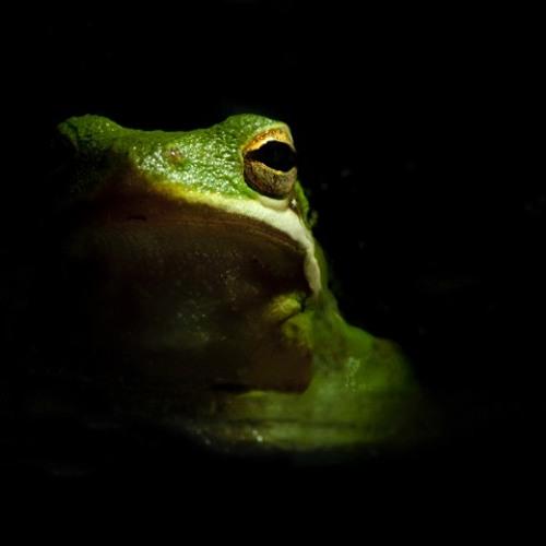 Dj Frogg - In Da House