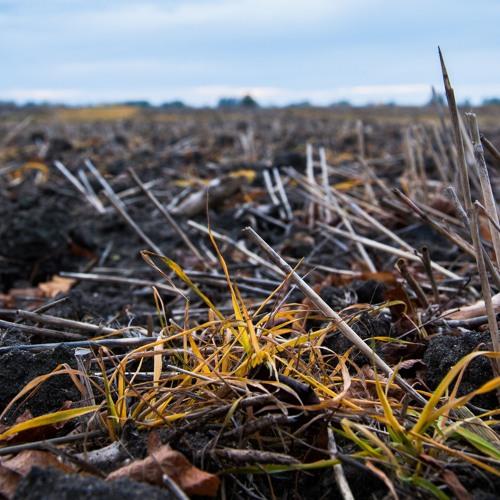 Die Agrar- und Lebensmittelindustrie (1/3): Glyphosat - Giftig oder harmlos?