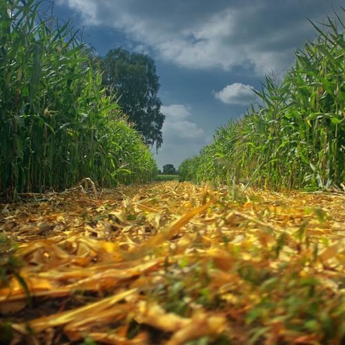 Die Agrar- und Lebensmittelindustrie (2/3): Erfolgsmodell Agrarchemie
